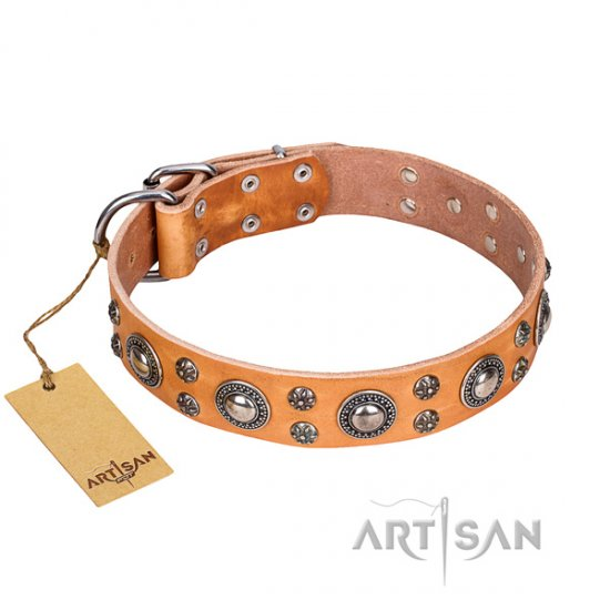 Stylish Dog Collar FDT Artisan with Studs 'Extra Sparkle'