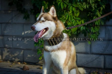 """King Style"" Extra Durable Leather Dog Collar For Siberian Husky"