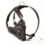 Agitation Training Padded Leather Dog Harness UK Pro Design