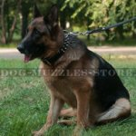 Designer Leather Dog Collar with Spikes for German Shepherd