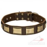 Leather Collar for Dogs with Brass Plates