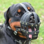 Leather Dog Muzzle UK for Large Dog Breeds Like Rottweiler