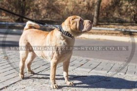 """Premium Finery"" Stylish Leather Dog Collar For Shar Pei 1.6"""