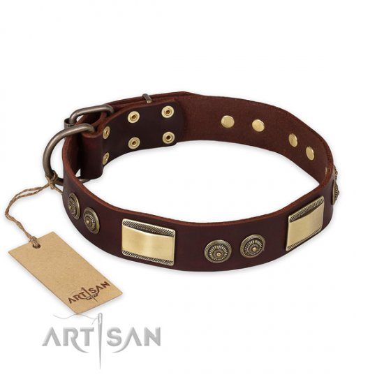 Fantastic Decorated Dog Collar FDT Artisan 'Golden Stones'