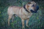 """Empire Of Beauty"" Best Dog Collar For Shar Pei With Adornment"