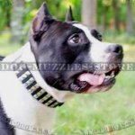 Studded Dog Collar for Amstaff | Amstaff Collar Glancing Style