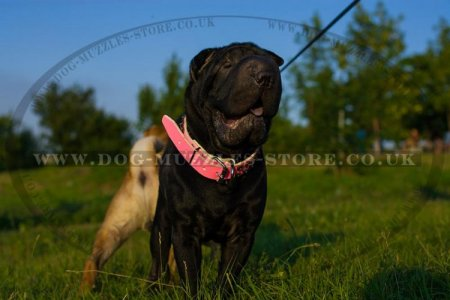"""Northern Sky"" Designer Pink Leather Dog Collar For Shar Pei"