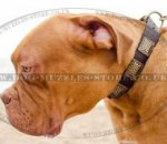 Dogue De Bordeax Daily Walking Dog Collar Wide Leather