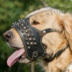 Soft Muzzle for Golden Retriever Breed with Spikes and Studs