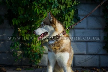 """Solid Boss"" Best Dog Collar For Siberian Husky With Decorations"