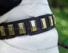Royal Dog Collar for Amstaff Dogs UK | Best Dog Leather Collars