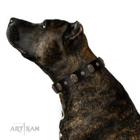 "Adorable Black Leather Dog Collar ""Pirate's Spell"" FDT Artisan"
