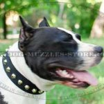 Staffordshire Bull Terrier Collar with Pyramids | Staffie Collar