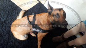 Non Pull Dog Harness UK Bestseller with Front Clip and Ring