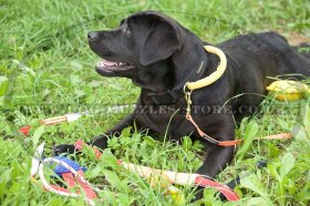 Strong Nylon Dog Collar with Handle for Labrador