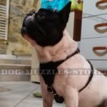 Best Adjustable French Bulldog Harness Leather Style & Comfort