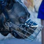 Light and Strong, Super Aired Cane Corso Muzzle UK Bestseller