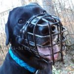 Labrador Basket Muzzle for Dog to Wear in Heat and Frost