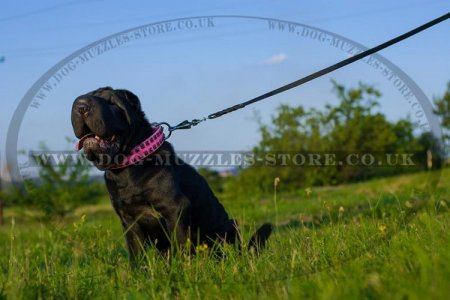 """Cosmo Lady"" Wonderful Leather Dog Collar For Shar Pei 1.6 In"
