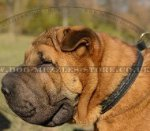 Braided Leather Dog Collar Choker for Chinese Shar Pei