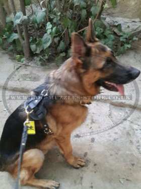 Dog Tracking, Walking Leather Dog Harness for Training