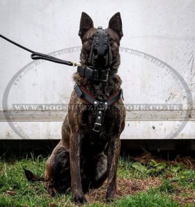Agitation and Attack Training Dog Muzzle | Strong Dog Muzzle K9