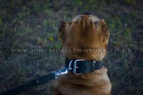 """Luxurious Comfort"" Designer Studded Dog Collar for Shar Pei"