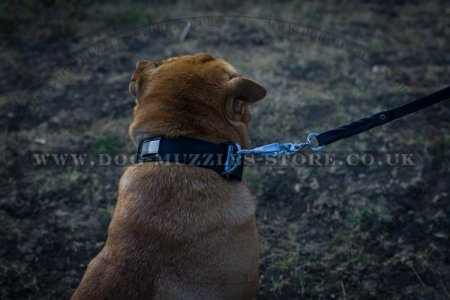 """Modern Art"" Best Dog Collar For Shar Pei With Brass Plates"