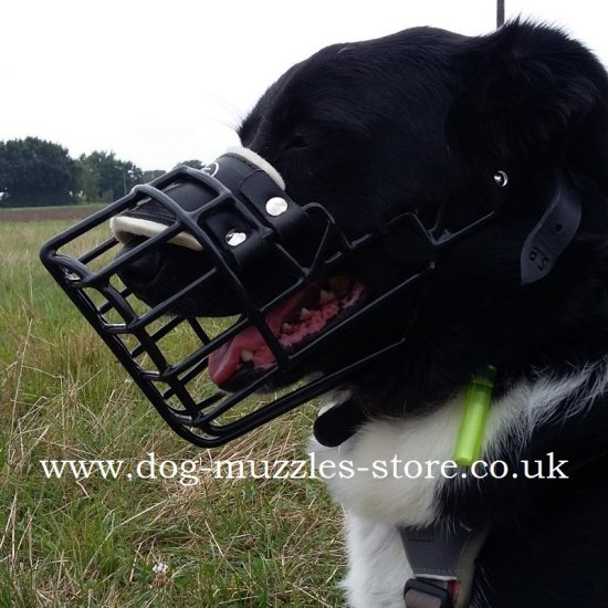 Special Dog Muzzle with Rubber Cover, Border Collie Muzzle Shape