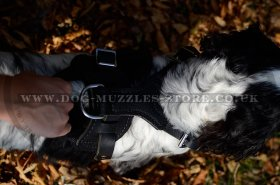 The Best Dog Harness for Spaniel UK Soft Padded Leather
