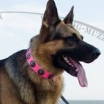 German Shepherd Dog Collar Pink Studded Design