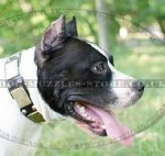 American Staffordshire Terrier Best Dog Collars UK