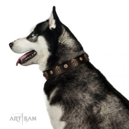 "A Fancy Dark Brown Leather Dog Collar ""Snazzy Paws"" FDT Artisan"