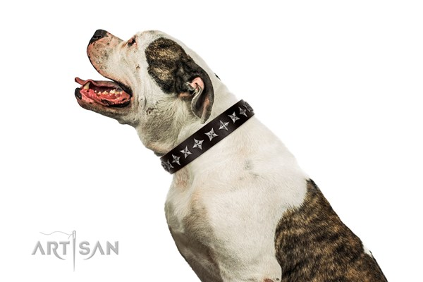 American Bulldog collar by Artisan
