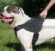 American Bulldog Training Harness | Dog Nylon Harness UK