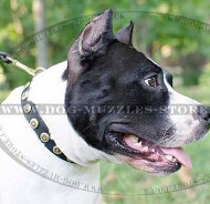 Staffordshire Bull Terrier Collar for Daily Dog Walking