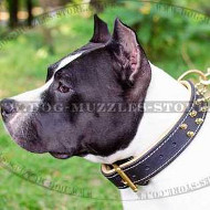 Amstaff Collar Soft Padded Spiked Design | Staffy Collar NEW!