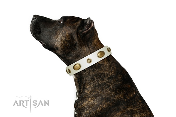 Artisan designer big dog collar for Amstaff