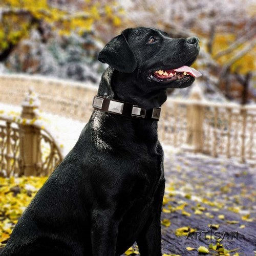 buy Artisan leather dog collar for Labrador online