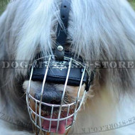 South Russian Shepherd Basket Dog Muzzle