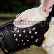 English Bull Terrier Muzzle for Attack Training, K9
