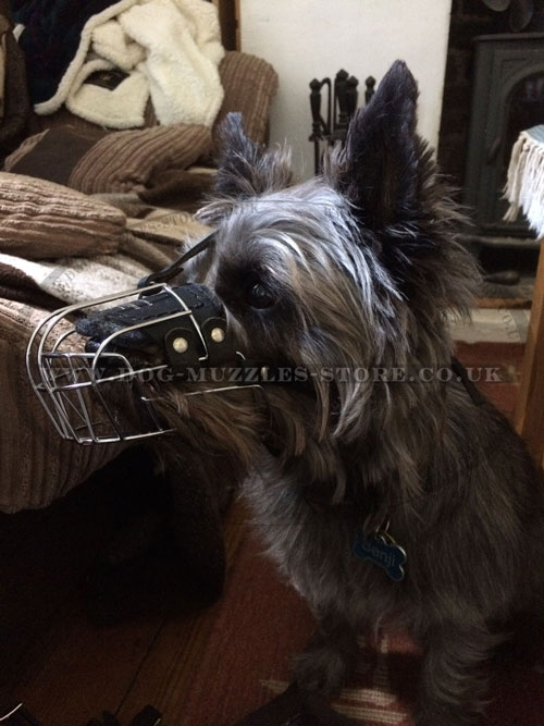 best dog muzzle for Cairn Terrier