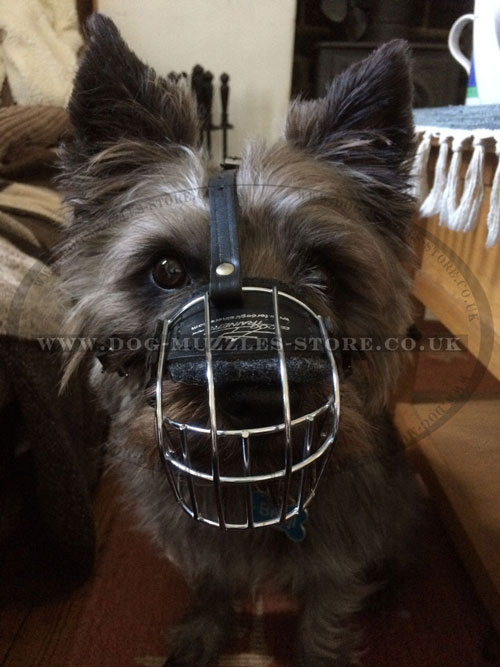 buy wire muzzle for Cairn Terrier