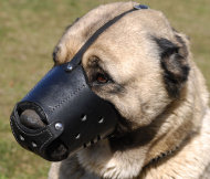 Caucasian Shepherd Training and Walking Leather Muzzle