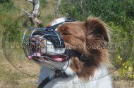 High-Quality Dog Muzzle For Australian Shepherd Muzzle Size