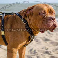 Luxury Dog Harness for Dog De Bordeaux | Soft Padded Dog Harness