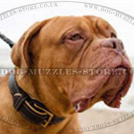 Dogue De Bordeaux Collar Soft Padded with Nappa
