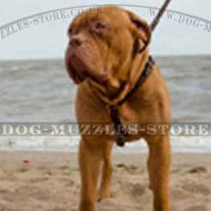Dogue De Bordeaux Harnesses Luxury Design | Luxury Dog Harnesses