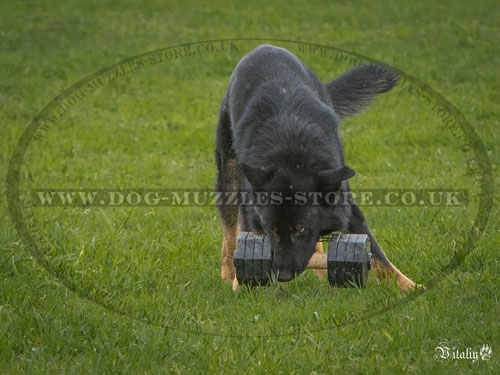 dumbbell for dogs training UK
