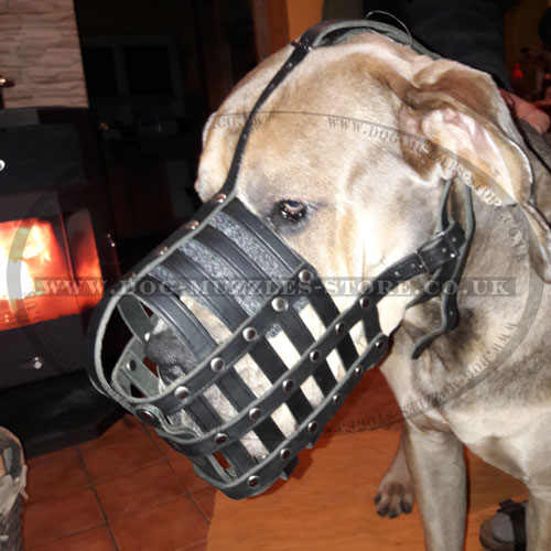 Great Dane leather dog muzzle UK